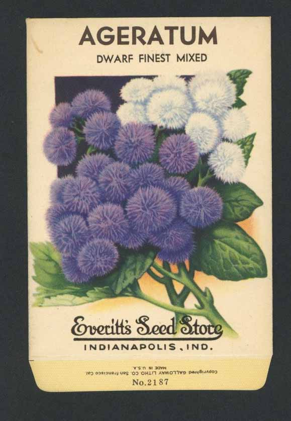 Ageratum Vintage Everitt's Seed Packet, Dwarf Finest Mixed