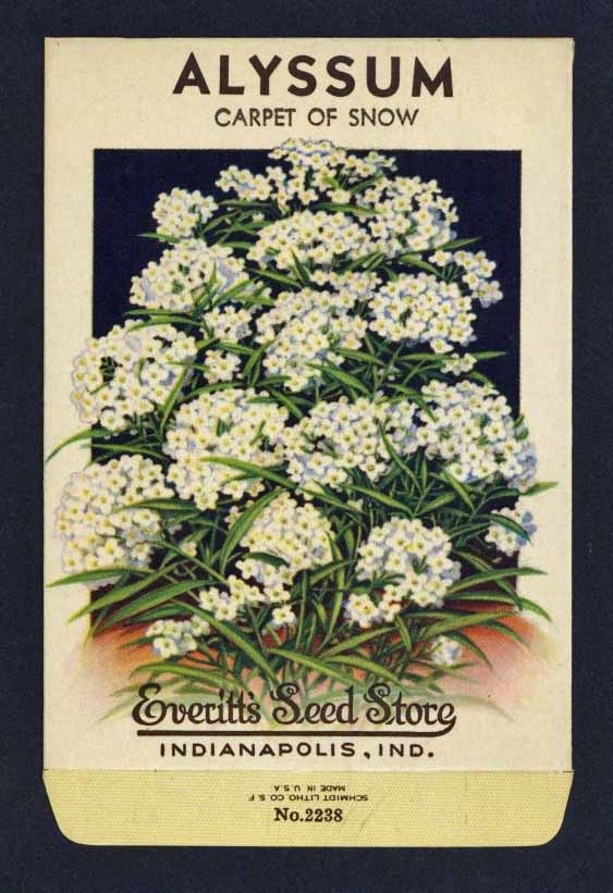 Alyssum Vintage Everitt's Seed Packet, Carpet of Snow