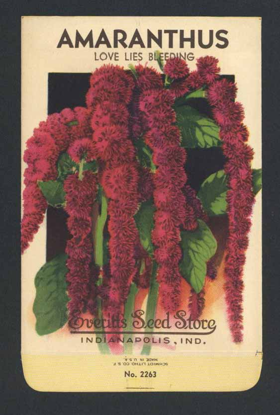 Amaranthus Vintage Everitt's Seed Packet, Love Lies Bleeding
