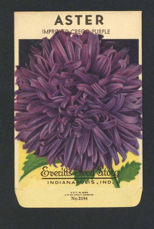 Aster Vintage Everitt's Seed Packet, Purple
