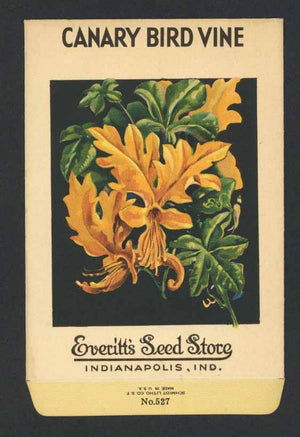 CANARY BIRD VINE Vintage Everitt's Seed Packet