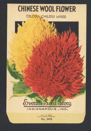 Chinese Wool Flower Vintage Everitt's Seed Packet