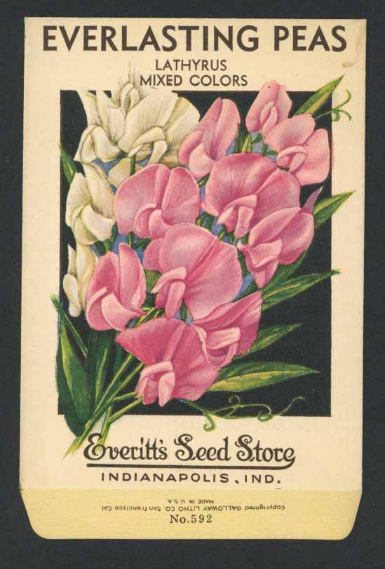 Everlasting Peas Vintage Everitt's Seed Packet