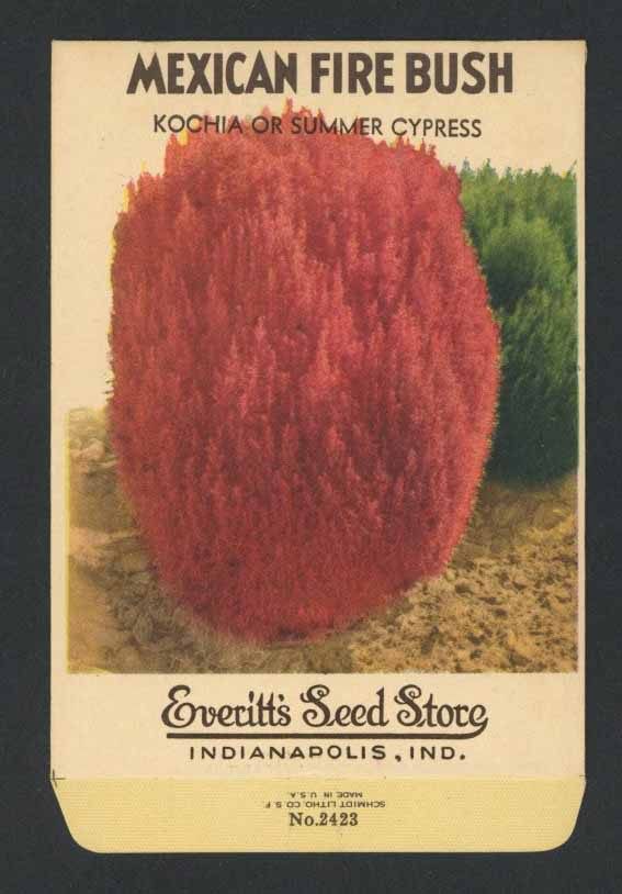 Mexican Fire Bush Vintage Everitt's Seed Packet