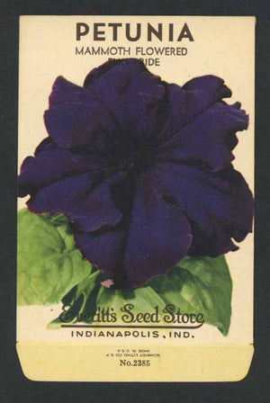 Petunia Vintage Everitt's Seed Packet, Mammoth Flowered