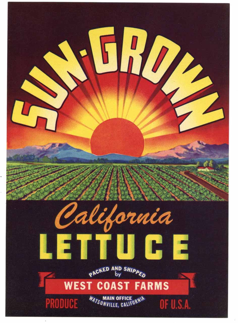 Sun-Grown Brand Vintage Watsonville Vegetable Crate Label