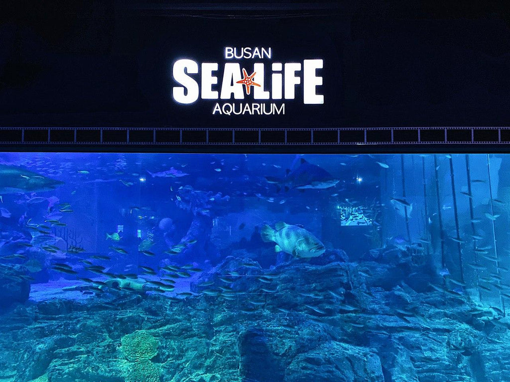 Busan SEA Life Aquarium