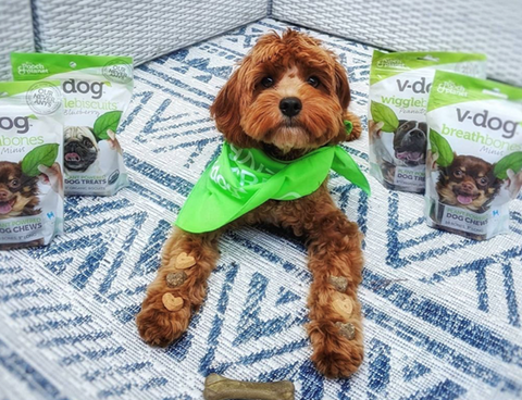 Puppy surrounded with Vdog products