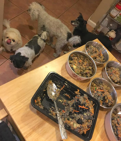 Vegan chef mindy poortingas kibble topper recipe v dog hey there v dog food fans forumfinder Choice Image