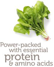Power-packed with essential protein & amino acids