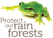 Protect our rain forests