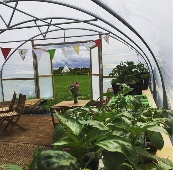 gastropod cafe in a polytunnel best cornish cafes