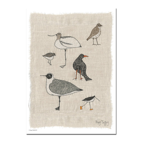 Cornish birds - A3 print