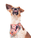 Cute Dog in Toucan Summer Dog bandana made by Royal Collections and Co. and Rifle Paper Co.