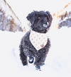 Cute Dog in X Marks the Spot Reversible Dog Bandana made by Royal Collections and Co.
