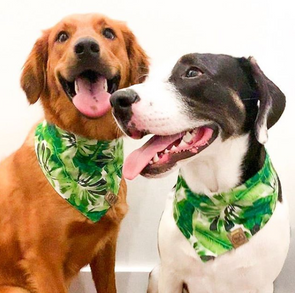 Cute Dogs in Amazon Reversible Summer Dog Bandana made by Royal Collections and Co.
