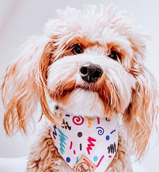 Cute Goldendoodle Dog in 90s Kid Dog Bandana made by Royal Collections and Co.