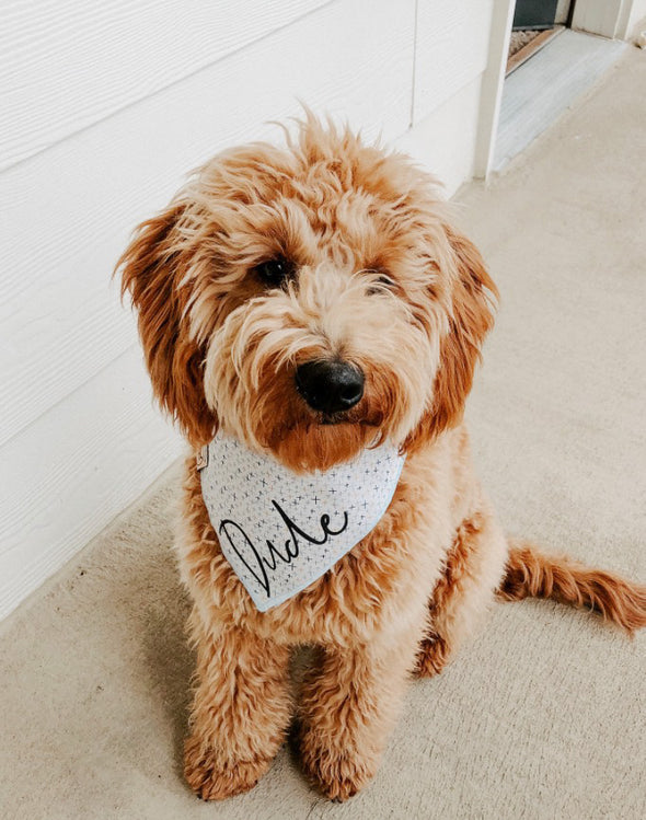 Cute Goldendoodle Dog in Muted Summer Dog Bandana made by Royal Collections and Co