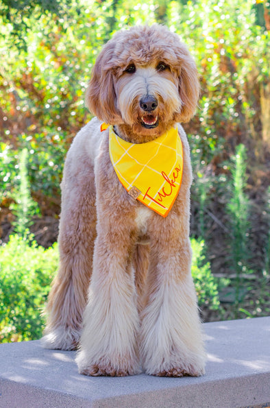 Sunshine Plaid Dog Bandana
