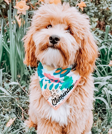 Cute Goldendoodle Dog in Wild Things Dog Bandana made by Royal Collections and Co..JPG