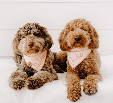 Cute Goldendoodle Dogs in Peach Tie Die Summer Bandana made by Royal Collections and Co