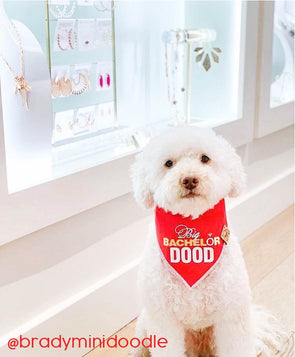 Cute Doodle Dog in Bachelor Inspired Dog Bandana made by ROYAL COLLECTIONS AND CO