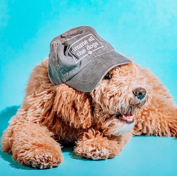 Cute Goldendoodle Dog in Gimme All The Dogs Dog Mom Hat in Charcoal sold by Royal Collections and Co. made by Dapper Paw
