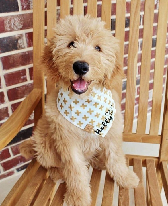 Cute Goldendoodle Dog in X Marks the Spot Reversible Dog Bandana made by Royal Collections and Co.