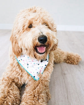 Colorful Dots Dog Bandana