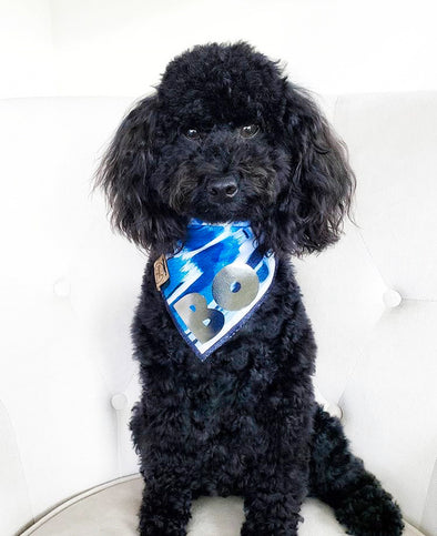 Mini Poodle in Streaks of Sapphire Dog Bandana made by Royal Collections and Co.