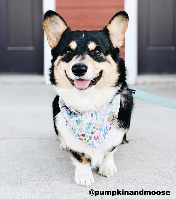 Cute Corgi Dog in Lilly Pad Summer Dog Bandana made by Royal Collections and Co.