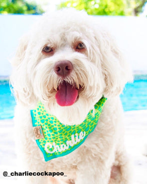 Cute Doodle Dog in Green and Aqua Reversible Dog Bandana made by Royal Collections and Co.