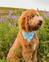 Cute Goldendoodle Dog in Blue Mosaic Reversible Summer bandana made by Royal Collections and Co.