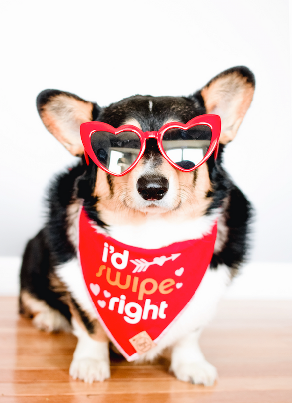 Cute Corgi Dog in I'd Swipe Right Tinder Inspired Valentines Day Dog Bandana made by Royal Collections and Co.