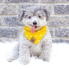 Cute dog in Amazon Reversible Dog Bandana made by Royal Collections and Co.