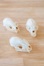 Load image into Gallery viewer, Mink Skull