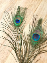 Load image into Gallery viewer, Peacock Feather
