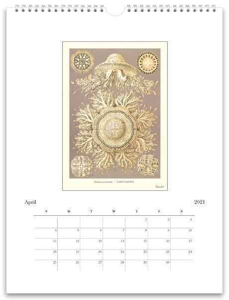 Found Image Press Wall Calendar, Art Forms of Nature, 2021