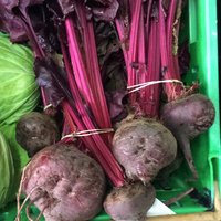 Beetroot bunched grown here.