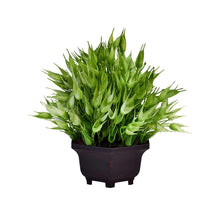 Load image into Gallery viewer, Multi Head Artificial Plant With Pot, Perfect For Home, Garden & Office Decorating - Size 8 x 8.5 Inch