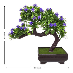 Green and Purple Bonsai Plant for Table and Home