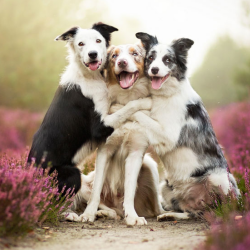 5 Ways To Make A Dog Happy