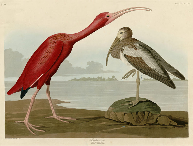 Your Online Gallery of Rare and Fine Audubon Prints.