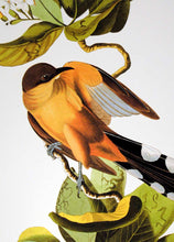 Load image into Gallery viewer, Detail of Abbeville Press Audubon limited edition lithograph of pl. 169 Mangrove Cuckoo