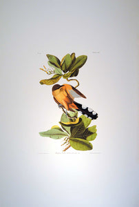 Full sheet view of Abbeville Press Audubon limited edition lithograph of pl. 169 Mangrove Cuckoo