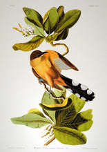 Load image into Gallery viewer, Closer view of Abbeville Press Audubon limited edition lithograph of pl. 169 Mangrove Cuckoo