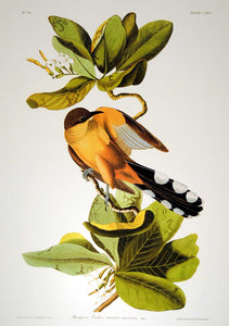 Closer view of Abbeville Press Audubon limited edition lithograph of pl. 169 Mangrove Cuckoo