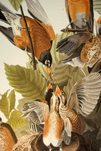 Load image into Gallery viewer, Detail of Abbeville Press Audubon limited edition lithograph of pl. 131 American Robin
