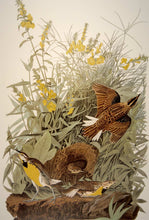 Load image into Gallery viewer, Closer view of Abbeville Press Audubon limited edition lithograph of pl. 136 Meadow Lark