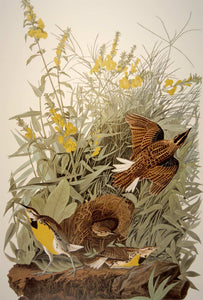 Closer view of Abbeville Press Audubon limited edition lithograph of pl. 136 Meadow Lark